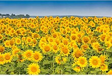 Oedim Fototapete Vinyl Wand Wand Sonnenblume |