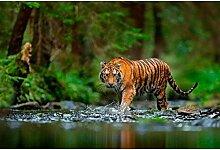 Oedim Vinyl Wand Dschungel und Tiger | Fototapete