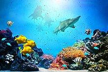 Oedim Wandtapete aus Vinyl für Fische | 500 x 300