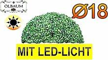 ÖLBAUM Buchsbaum mit LED-Lichtband kleine