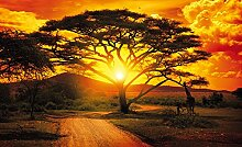 Olimpia Design 400P8 Fototapete Photomural Afrika,