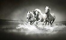 Olimpia Design 426P8 Fototapete Photomural Pferde