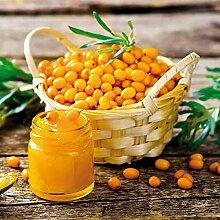 omgarten Sanddorn 'Friesdorfer Orange' |