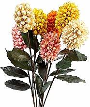 Onisjun Niederländische Hyazinthe Blumensamen