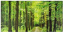 Outdoor Leinwand Forest Path UV & wasserabweisend