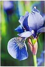 Outdoor Leinwand Violett Iris UV & wasserabweisend