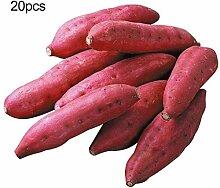P12cheng Saatpflanze 1 Beutel Süßkartoffel Samen