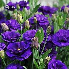 P12cheng Samenpflanze 50 Stück/Beutel Eustoma