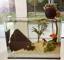 Pack Entdeckung Aquarium mit Filtration Natürliche aquaponik–Das Set ideal für entdecken ein Ökosystem Miniature und Deko.
