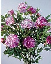 Päonien Pfingstrosen - Busch Kunstblumen 120cm rosa