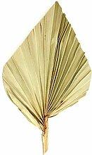 Palm Spear mit Stiel medium in Natur (50 Stück)