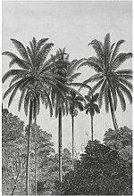 Palmen Fototapete - Grau/Schwarz - Vliestapete -