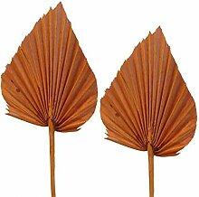 Palmspeer groß orange 100st.