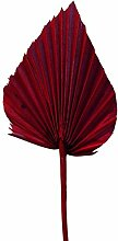 Palmspeer groß rot 100st.