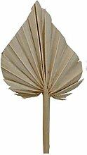 Palmspeer mini natur 100st.