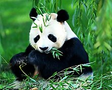 Panda Diamant Malerei 5D DIY Voll Bohren Blätter