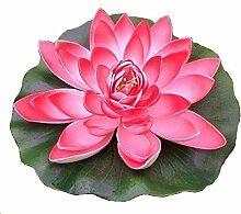 paradieseinkauf Wasserlilie Schwimmend Lotusblüte