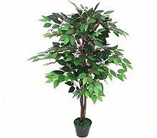 PASAMO 06798 Ficus Benjamini Birkenfeige, Grüne