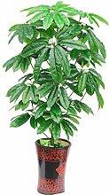 PASAMO 07689 Glücksbaum Geldbaum Fortune Tree