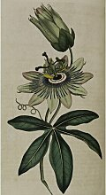 Passion Flower, Kunstdruck Magnolia Box Größe: