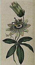 Passion Flower, Kunstdruck Magnolia Box