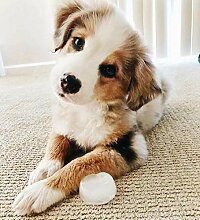 pectyxsw Netter Haustierhund DIY Diamond