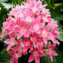 Pentas Seeds 150Pcs/Bag Novel Plant Mini Garden
