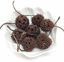 Peperlonely Natürliche getrocknete Pflanze