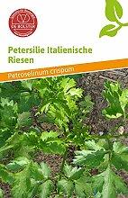 Petersilie Italienische Riesen | Bio-Petersiliensamen von De Bolster