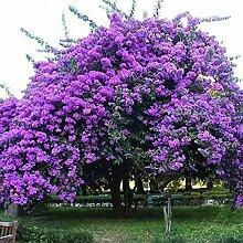 Pets Delite® Blau Lila Viola Samen Garten