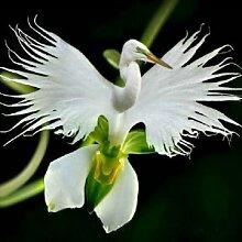Pets Delite® Japanische Reiher-Blumen-Samen