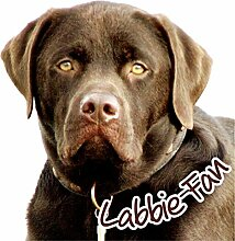 Petsigns Aufkleber Labrador Braun - Kopf
