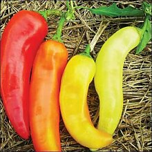 Pfeffer süße Bananen-Gemüsesamen (Capsicum