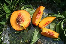 Pfirsich Harrow Beauty - 1jähriger Easytree im 5