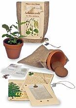 Pflanze einen Baum - Baumsaat-Set Schwarzerle