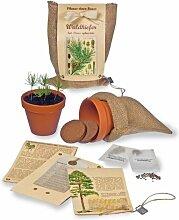 Pflanze einen Baum - Baumsaat-Set Waldkiefer