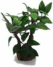 Pflanze Pflanzen Baum Dekoration Weihnachten Weihnachtskugeln Baumschmuck Dekor Weihnachten Zubehör Krippenfiguren Krippe cm 13x 15