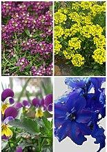 Pflanze Staude Außen Keimung 95% + 6 Gruppen für Select Blumensamen 4 in 1 Lot für Garten Schöne 1