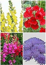 Pflanze Staude Außen Keimung 95% + 6 Gruppen für Select Blumensamen 4 in 1 Lot für Garten Schönen 4