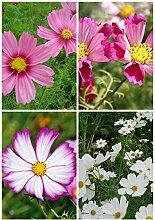 Pflanze Staude Außen Keimung 95% + 6 Gruppen für Select Blumensamen 4 in 1 Lot für Garten Schöne 3