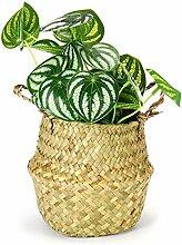 Pflanze Wachsende Tasche Seegras Gewebte Lagerung