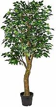 Pflanzen Kölle Ficus Benjamini, grün, ca. 190