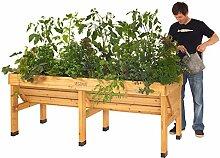 Pflanzen Kölle Hochbeet Veg Trug groß