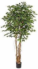 Pflanzen-Kölle Kunstpflanze Ficus Benjamini,