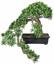 Pflanzen Kölle Kunstpflanze Podocarpus Bonsai in