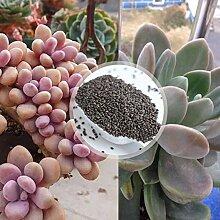 Pflanzensamen 1 Beutel Saft Pflanze Samen Mini