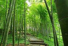 Pflanzensamen Dendrocalamus hamiltonii Exotische Riesen Clumping Bambus Samen asiatischen Muttergartendekoration Pflanze frei 100 PCS B35