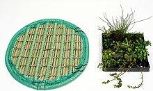 Pflanzinsel inkl. 11 winterharten Teich-Pflanzen, rund, 60 cm – schwimmende Teichinsel mit Teichbepflanzung – Algen reduzieren in Koi-Teich durch Schwimmpflanzen auf Pflanzeninsel
