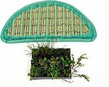 Pflanzinsel inkl. 12 winterharten Teich-Pflanzen, halbrund, 80 cm – schwimmende Teichinsel mit Teichbepflanzung – Algen reduzieren in Koi-Teich durch Schwimmpflanzen auf Pflanzeninsel