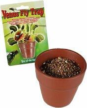 Pflanzset VENUS FLY TRAP die fleischfressende Pflanze